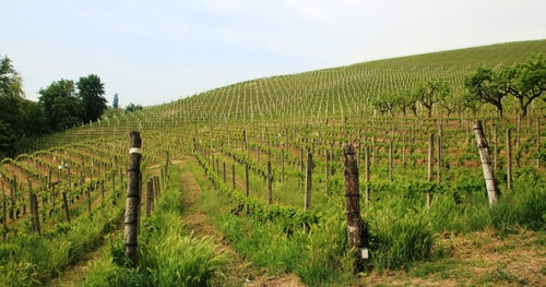 #ItaliainVino 7a tappa: Il primo piede in Monferrato