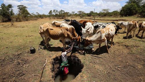 'Smart' insurance helps poor farmers to cut risk