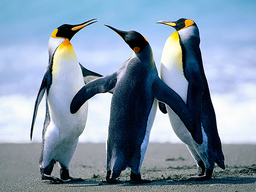 Penguins: new lessons to be learned about the importance of mediation