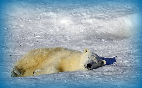 It's not just about Polar Bears.....