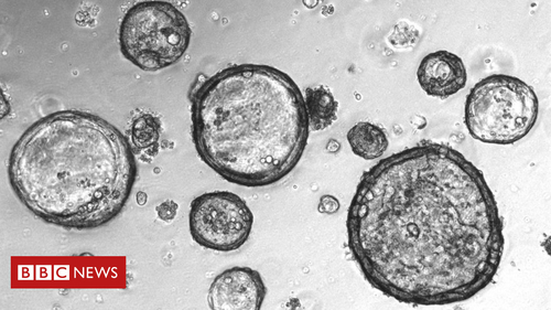 Mini-tumours' created to battle cancer