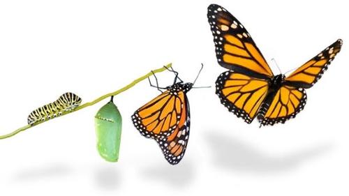 Five cornerstones for successful transformation