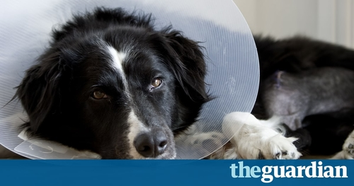 Right to time off to care for your pet?