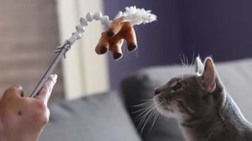 Capture the purrfect picture!