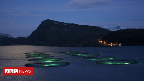 Marginal gains come to Norwegian fish farming