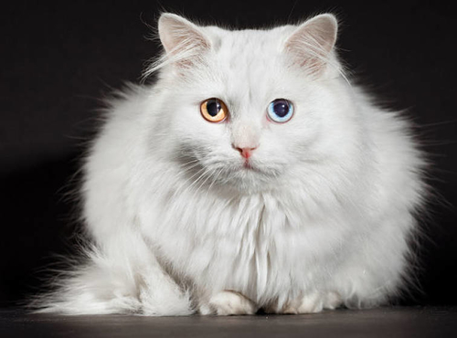 Doctrine of equivalents in the UK – is the angora cat live and well?