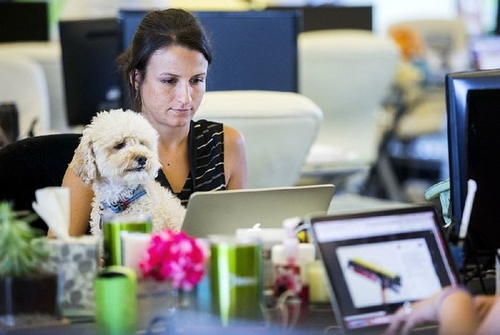 Dogs at offices in Arkansas? It's heads or tails