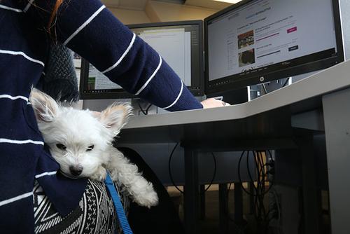 Pets reduce stress at work