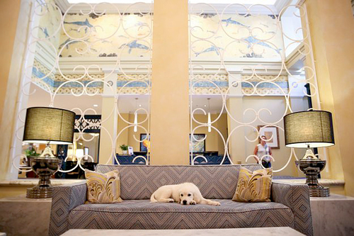 8 Adorable Dogs Who Work (or Just Hang Out) Full Time in Luxury Hotels