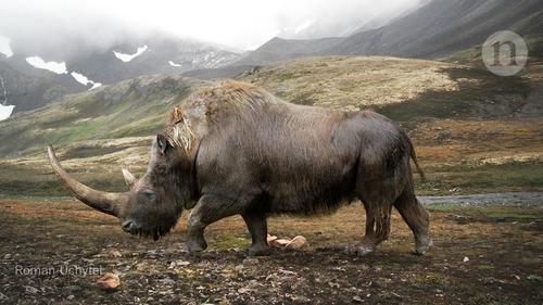 Big data little help in megafauna mysteries