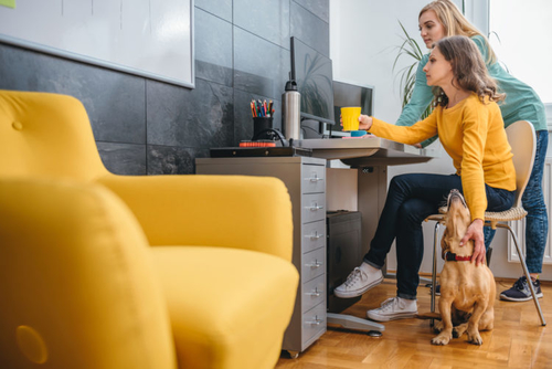 UK pet owners are kitting out their office space to accommodate their four-legged companions, accord