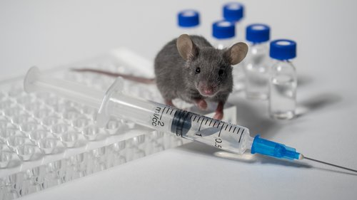 Big data can make lab-mice studies more relevant to humans