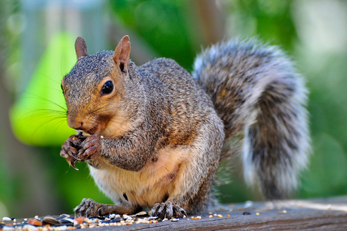 Creating our own jargon: when squirrel is a verb