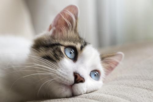Cat got your tongue? 20 bizarre English idioms