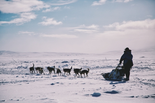 Have you ever been to the Arctic? Experience something amazing