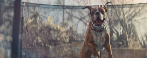 Why are the John Lewis Christmas adverts so successful?