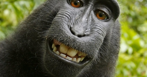 Man sued by monkey over photograph now penniless?