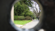 Senior Managers Regime - peering through the keyhole