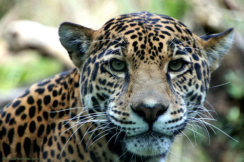 Jaguar leaps into Lyft
