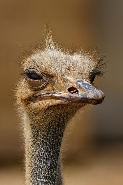 70% aller Unternehmen werden gehackt! Vogel Strauß, nimm deinen Kopf aus dem Sand!!!