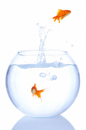 People Are Not Goldfish
