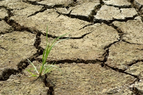 Commission offers further support to European farmers dealing with droughts
