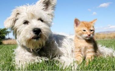 UK Pet Insurance Market tops £1bn