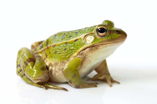 The Boiling Frog and Sustainability