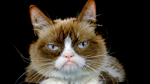 Grumpy Cat has the Last Word in 710K Win