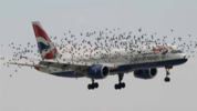 "GDPR Woes Take Flight: British Airways Asks Customers to Tweet Their Personal Information in Misguided Attempt to ""Comply"" with GDPR"