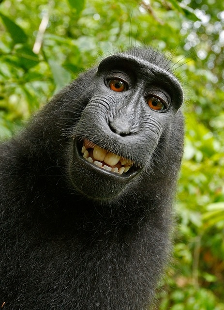 Monkey See Monkey Sue: 9th Circuit Says No