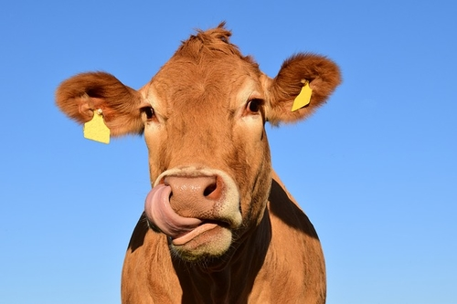 How Do You Tell A Cow From An Almond?