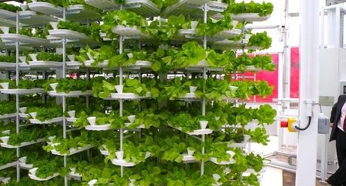 Farmlets: Sustainable, community micro farming.
