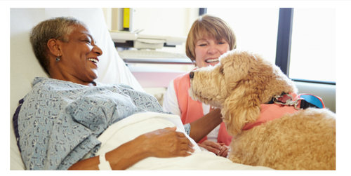 RCN publish new protocol on working with dogs in health care settings