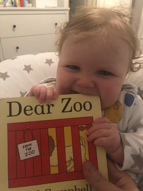 Dear Zoo...