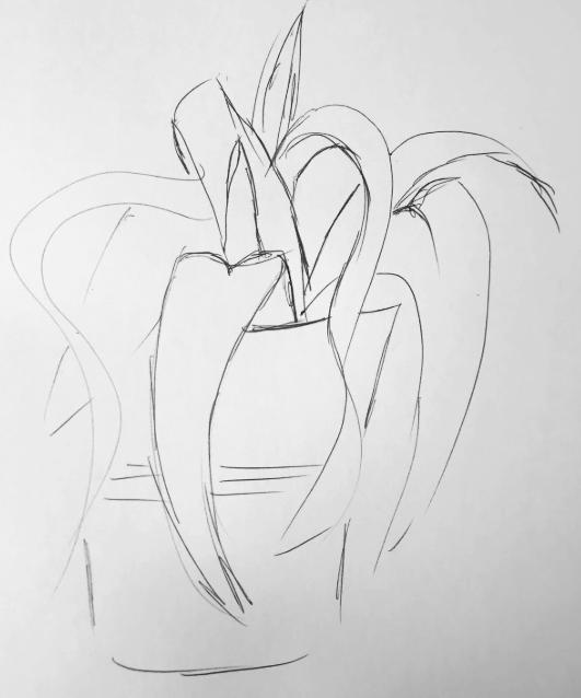 Plant sketch from JP Flintoff session